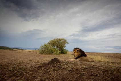 Un voyage extraordinaire au Kenya