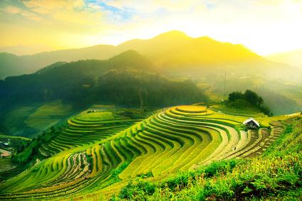 La culture gastronomique du Viêt Nam
