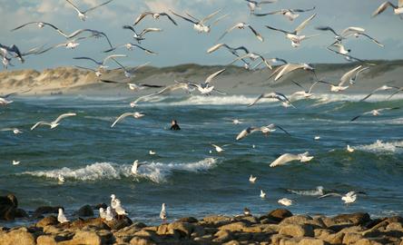[week-end breton] Surfer sur les vagues bretonnes : un spot idéal pour faire corps avec l'océan
